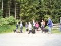 Hundeschulung Brilon Waldspaziergang