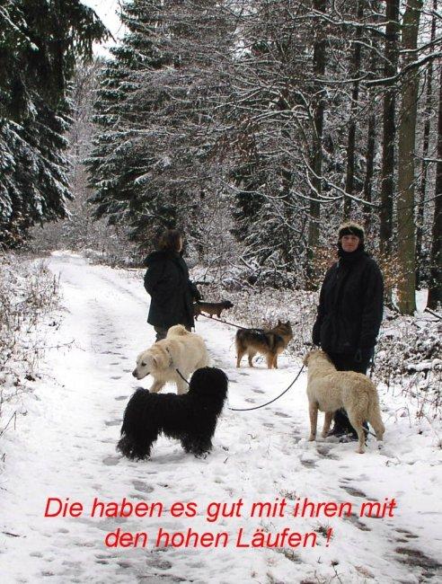 Puli Winterwanderung in Belg Läufe