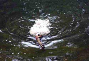 Puli Treffen Haltern Leni im Wasser