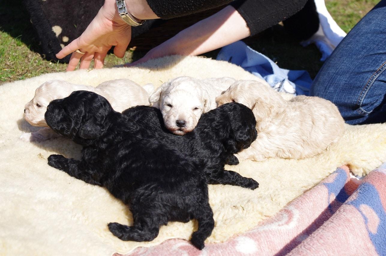 fokker de zotteligen Gefährten pups in de zon
