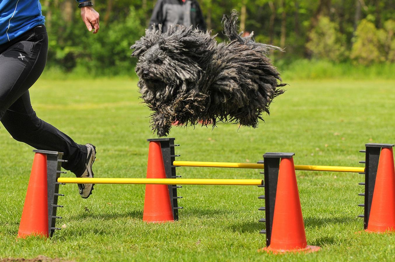 Stud dog Bobby Brown flies