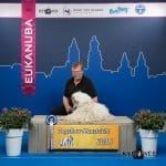 Stud dog Derek Dogshow Maastricht 2016