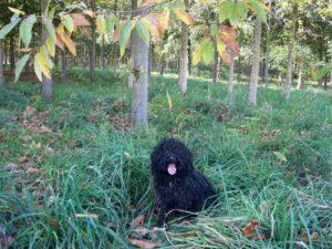 Puli Herbstwanderung in Nottuln Puli Wald