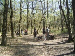 Puli Frühlingswanderung in Oer-Erkenschwick Bild 3