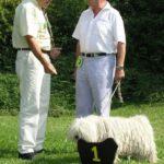 Puli Klubsieger Zuchtschau in Lautertal Hündinnen
