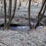 Puli Winterwanderung in Witten Bild 7