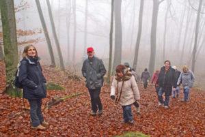 Herbstwanderung im Odenwald @ Odenwald | Beerfelden | Hessen | Deutschland