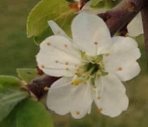 Frühlingswanderung der Landesgruppe Mitte in Gau Algesheim 19