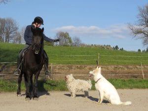 Puli friend sheepdog