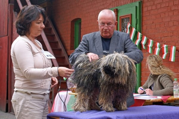 The Puli at exhibitions