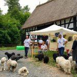 Tag der Tiere Bad Sobernheim Selten Rassen Puli Stand