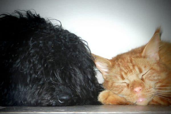 Puli friendships