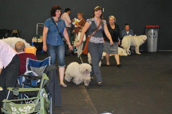 Europese hondententoonstelling in Nederland 2011