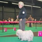 Europa dog show Holland 2011 Gerd im Ring