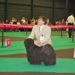 Europa dog show Holland 2011 schwarzer Puli