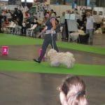 Paris Weltausstellung 2011 so geht es