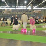 Paris Weltausstellung 2011 vorne kein hinten gross