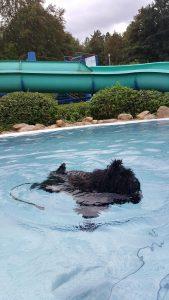 Puli im Schwimmbad