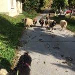 Klubausstellung Bodensee Lochmuehle Freilaufende Tiere