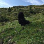 Deckrüde Bilbo Beutlin Vorstehhund