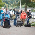 Klubausstellung Bodensee Ausflug zum Rheinfall