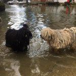 Klubausstellung Bodensee Puli Gespräch am Wasser