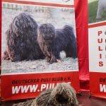 World dog show Leipzig 2018 Es gibt auch andersfarbig