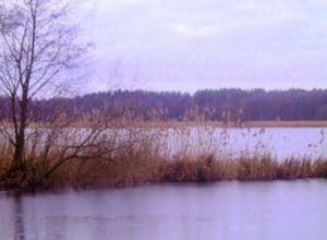 Puli Spaziergang LG Ost am Lugkteich in Brenitz-Sonnewalde @ Lugkteich in Brenitz | Sonnewalde | Brandenburg | Deutschland