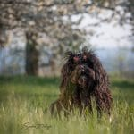 Puli breeder from the plietschen Deern Mieze in front of a cherry tree