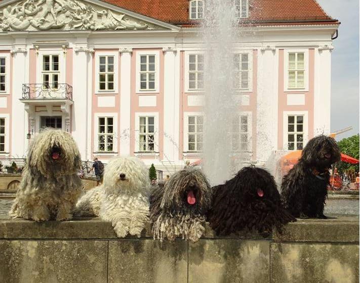 Auf dem Hundetag im Tierpark Berlin